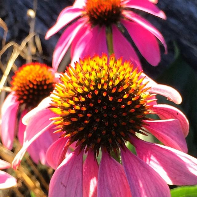 Lovely Autumn #flowers #lexingtonky #Nature