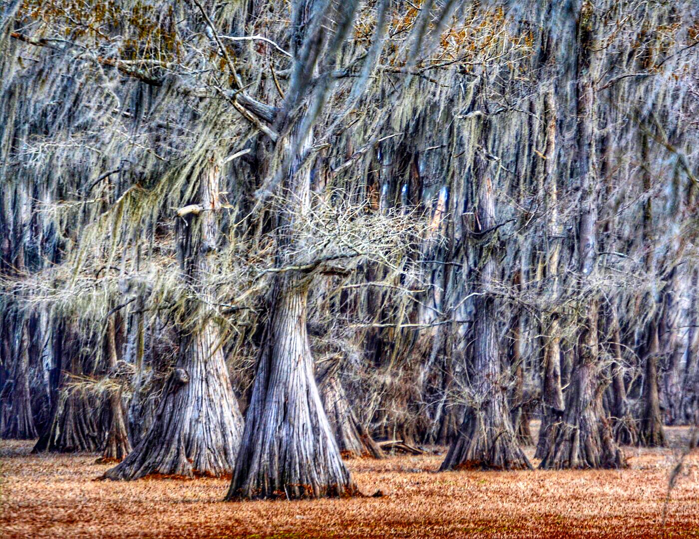 Uncertain Revisited: A Tour of Caddo Lake