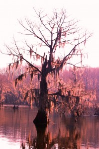 Caddo Lake near Uncertain, TX