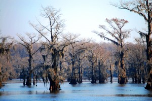 Caddo Lake near Uncertain, TX