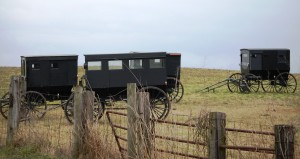 Amish Buggies in Gravel Switch