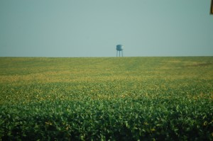 Walcott Corn Fields with water tower in the background