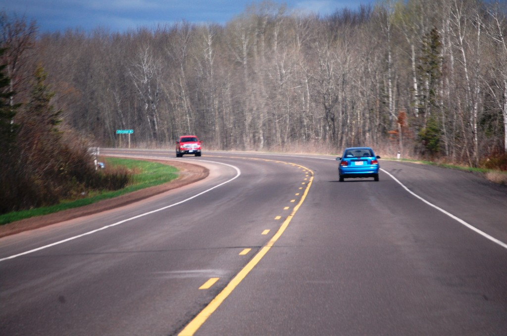 Miles of birch forest line Route 2 in eastern Wisconsin