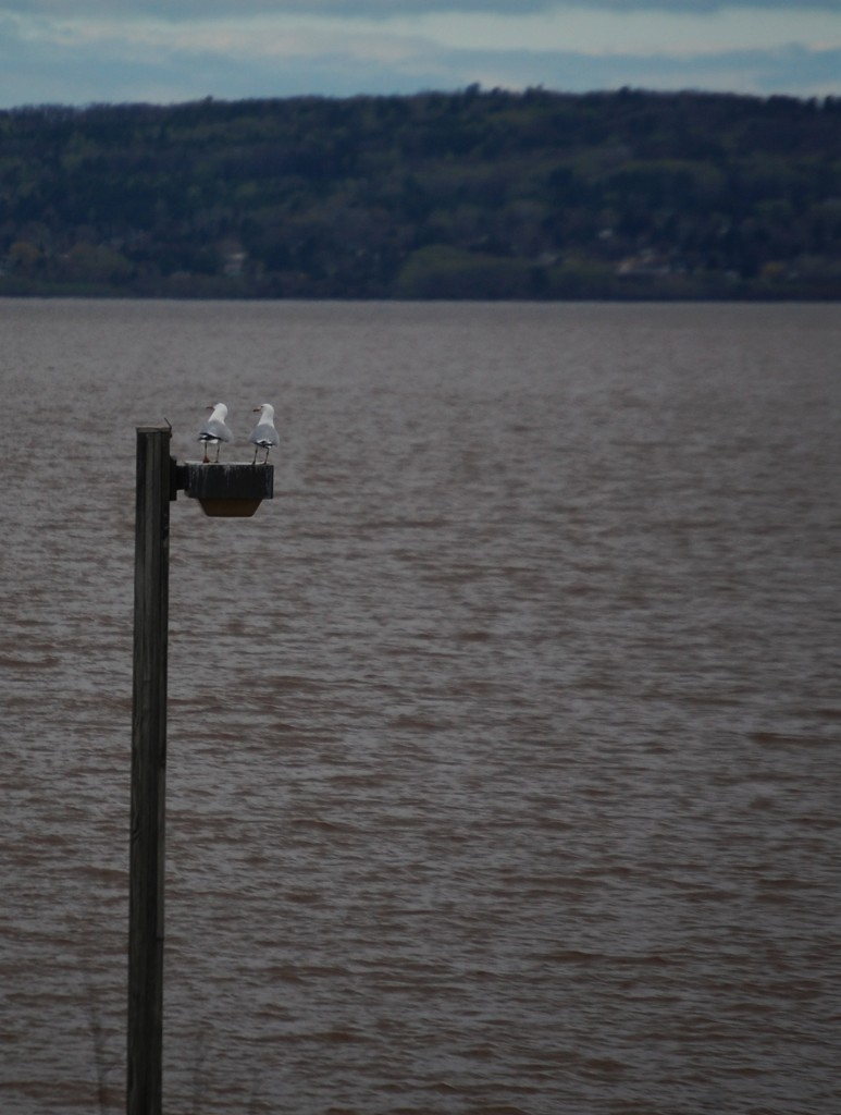 Two gulls look at the view of Lake Superior in Ashland, WI