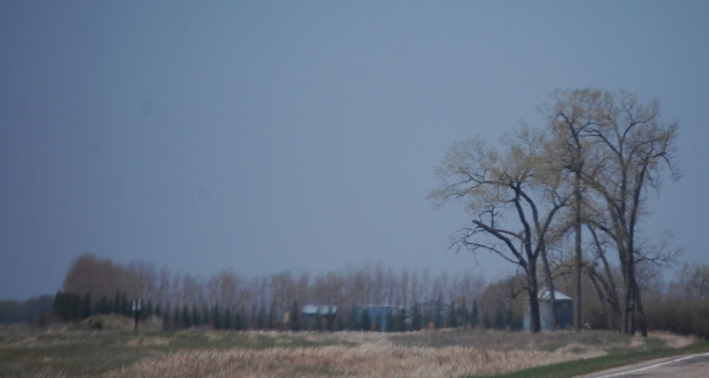 Trees along ND Hwy 20 south of Langdon, ND