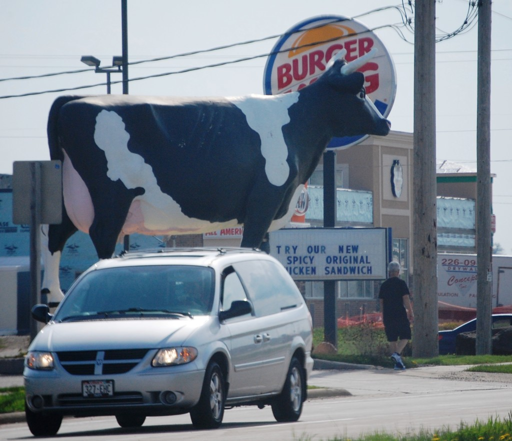 """Sissy the Cow in DeForest, WI.  Playing a little """"Chick-Fil-A"""" on Burger King!!"""