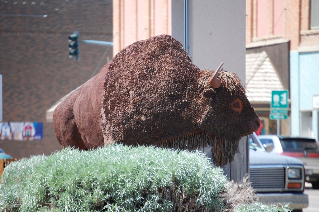 Cory Holmes' Bison in Havre, Montana