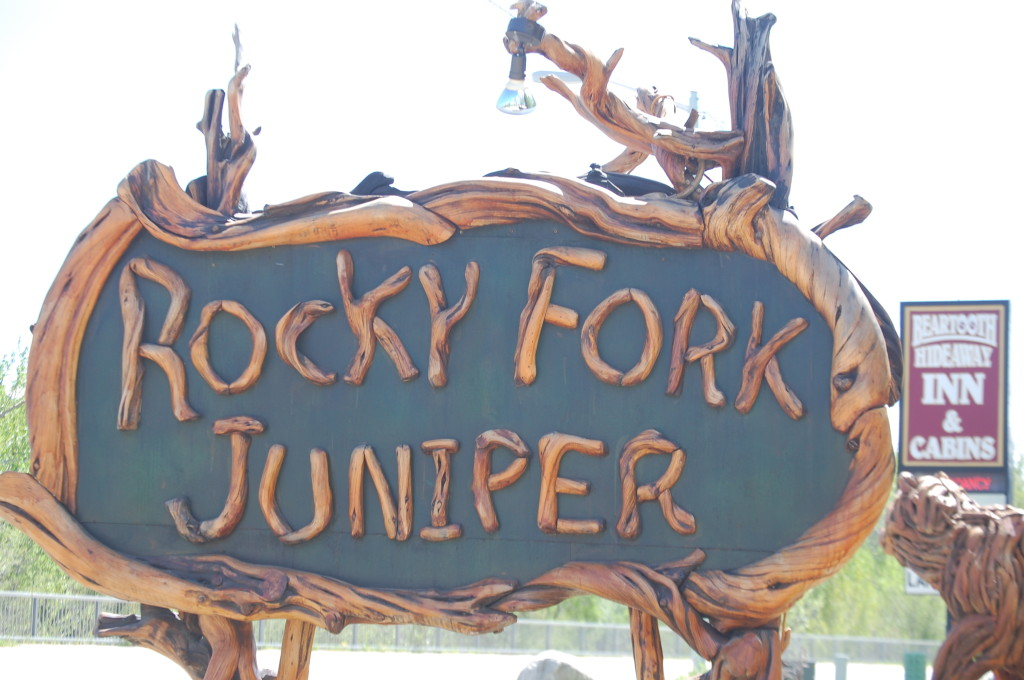 Rocky Fork Juniper, Red Lodge, Montana