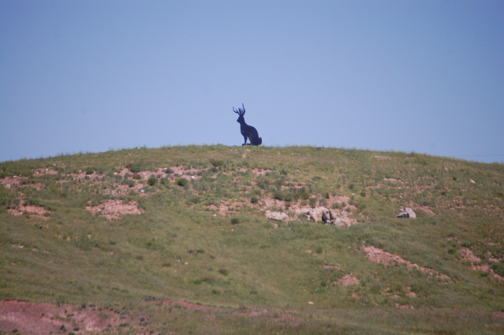 There's a jackalope in them thar hills!!