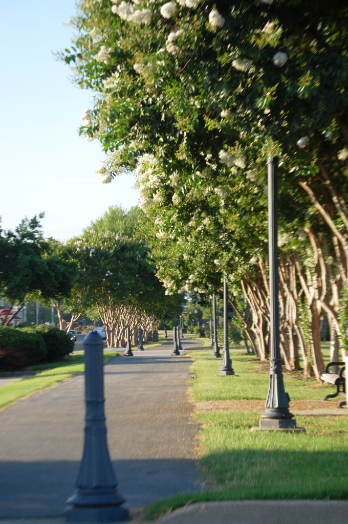 Tree-lined Walkway in Cleveland, MS