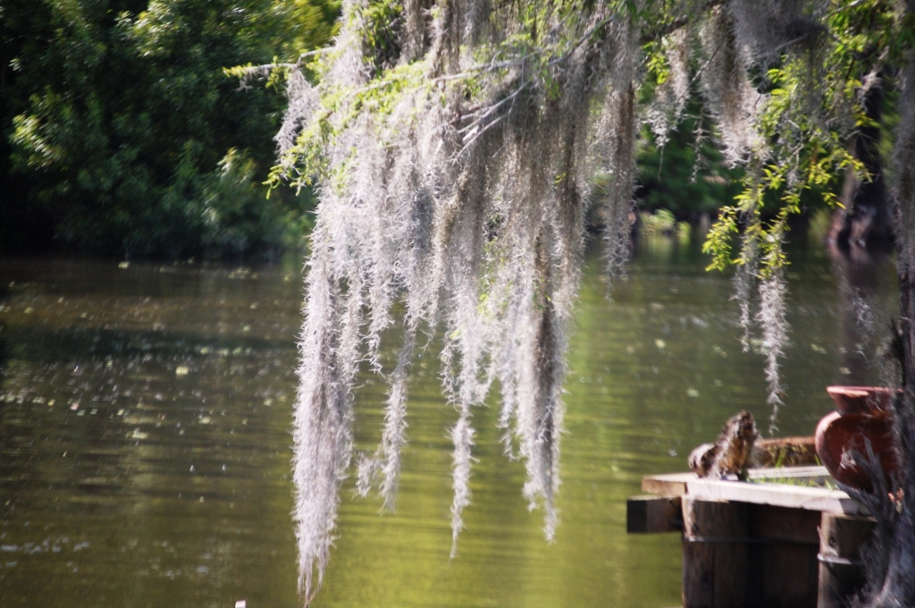 A scene from a Bayou in Pierre Part