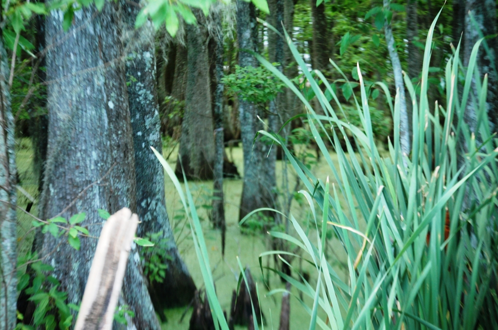 Green slimy swamp at P'MAWS...the Swamp Thing could come out any minute!