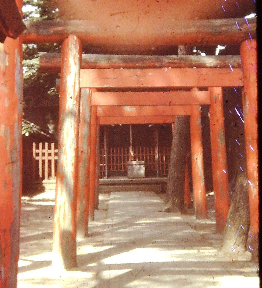 Shinto Toori Gates in Fukui, Japan (ca. 1976)