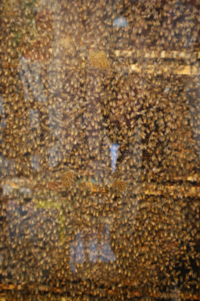A larger view of the hive....truly an amazing site