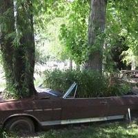 Grow-thru Cars at Real Goods (photo courtesy of roadsideamerica.com)