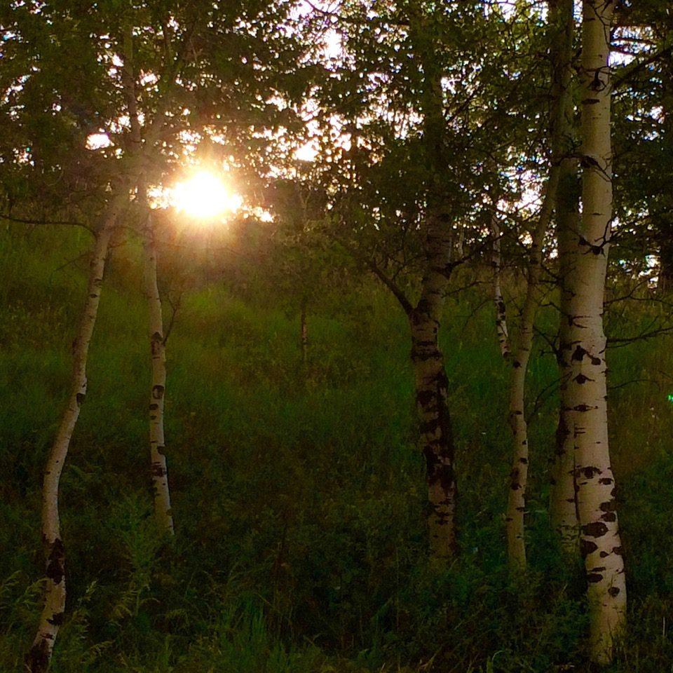 Morning sunrise in the aspens
