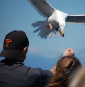 Feeding the seagulls on the ferry