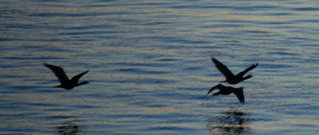 Birds glide by on the Seattle waterfront