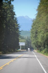 Many of the highways along Washington 104 and US 101 are lined with walls of guant pines.