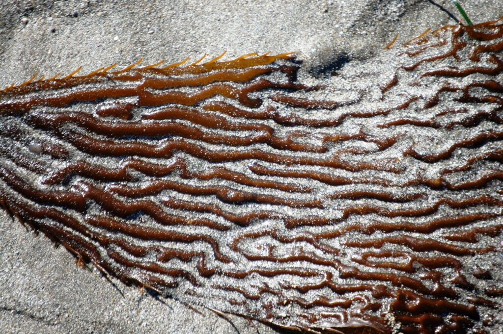Strange shapes formed by sand and kelp on the beach