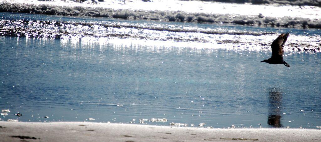 A seagull glides over the beach