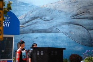 Giant whale mural in Seattle