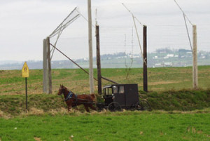 Amish buggies can be seen everywhere in and around Intercourse