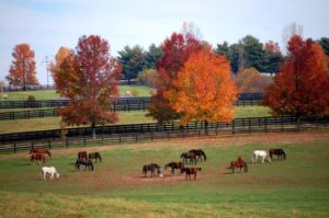 Horses graze in the fall on a Woodford County farm near Versailles.