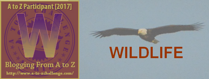 W is for Wildlife – #atozchallenge